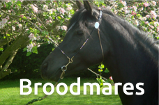 Broodmares section