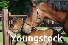 Youngstock section